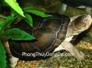 Rùa: Biểu tượng của sự trường thọ
