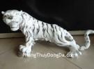Hổ trắng tiếu sanh hà A199