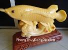 Cá kim long vàng lớn H281G