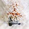 Cây thạch anh trắng chậu cao KC023