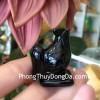 Gà đá hắc ngà nhỏ GM141-10
