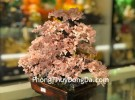 Cây tài lộc thạch anh hồng hạt nhỏ KC109