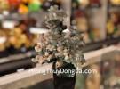 Cây đá ngọc Đông linh thân bonsai chậu kiểu nhật mới (Phước) KC119