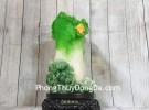 Bắp cải xanh đứng lớn trên bụi mẫu đơn đế gỗ xoay LN069