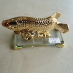 H292 2 150x150 Cá kim long vàng nhỏ H292G