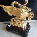 DSC02345 150x150 Cá kim long vàng đống tiền H284G